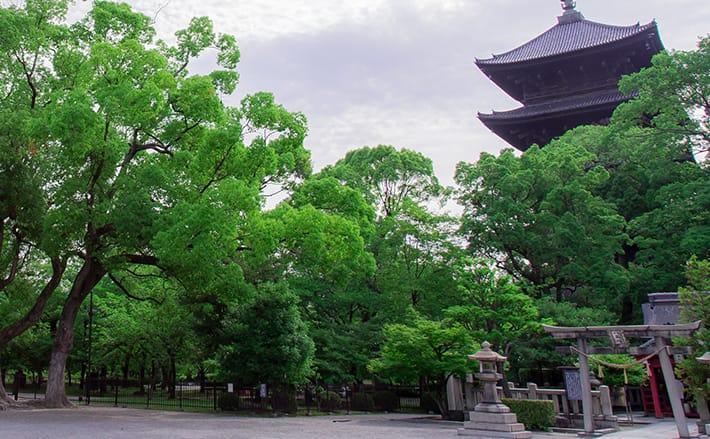 世界遺産「東寺」を朝さんぽ