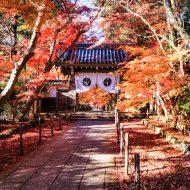 秋の光明寺
