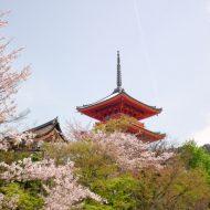 仁和寺の春