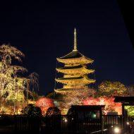 ライトアップの東寺