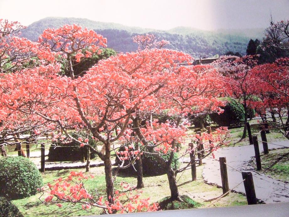 お寺に展示されていた写真