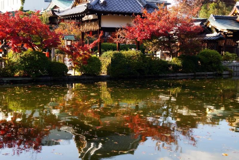 神泉苑の紅葉
