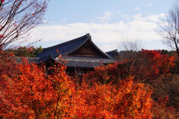 東福寺紅葉散り