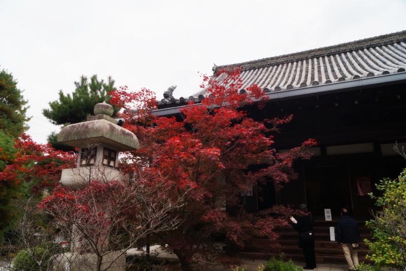 清涼寺紅葉