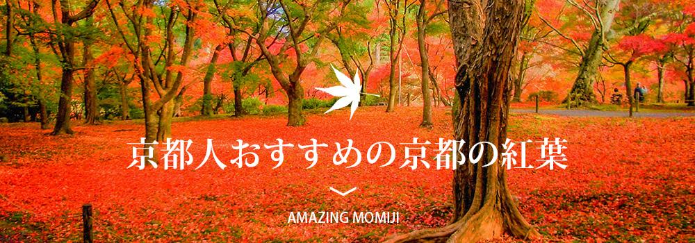 京都人おすすめの 紅葉