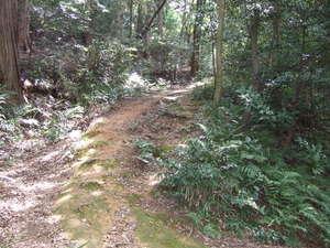 ブログ 粟田口からの登り道2 DSCF0222.JPG